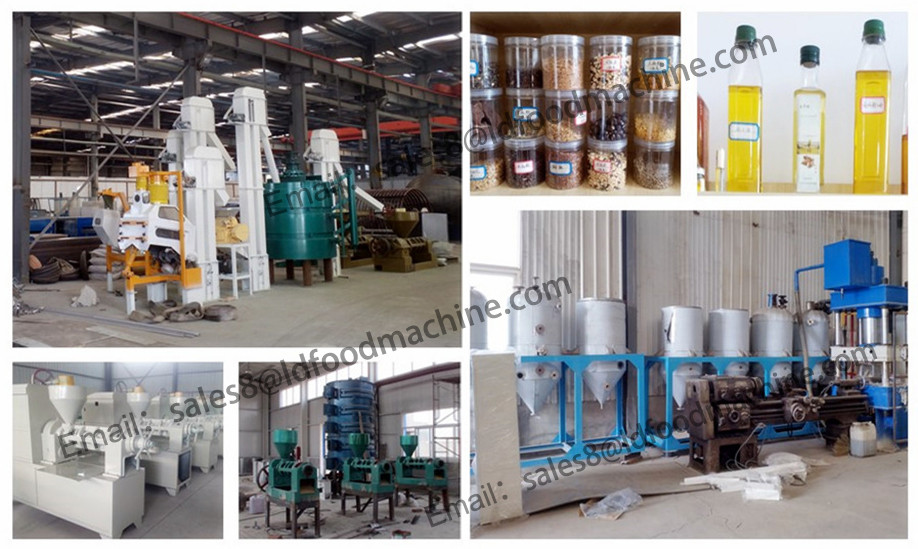 Small scale 6YY-230 edible oil press machine, sudan sesame seeds oil pressing, white sesame oil machinery